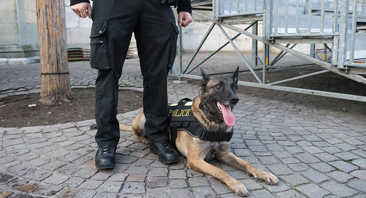 Perros policías. Foto: Shutterstock