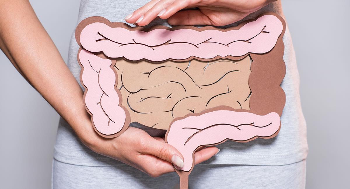 El intestino humano está formado por más de 40 metros cuadrados de tejido. Foto: Shutterstock