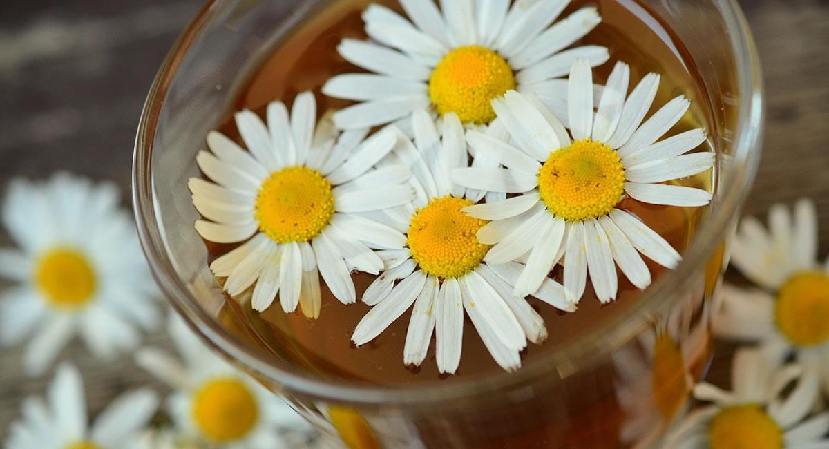 La principal forma de utilizar la manzanilla es mediante la preparación de infusiones a partir de sus flores. Foto: Pixabay