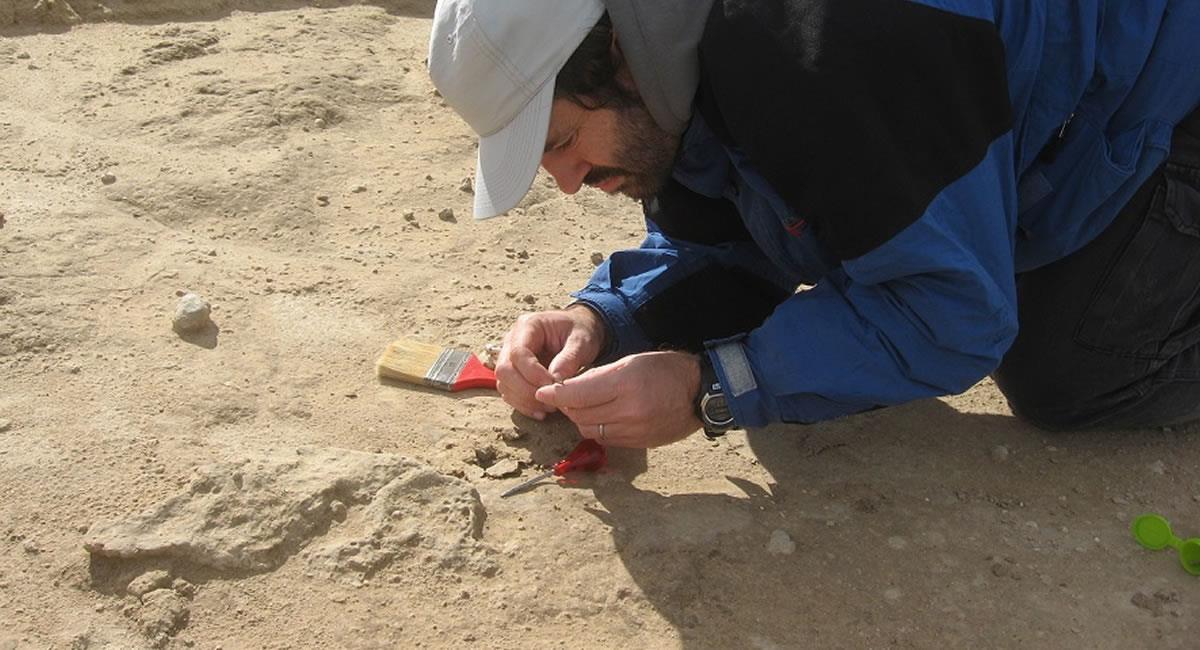 Hallazgo de un fósil atribuido a un vampiro gigante que vivió en la zona de Miramar (Argentina). Foto: Cortesía Museo Miramar