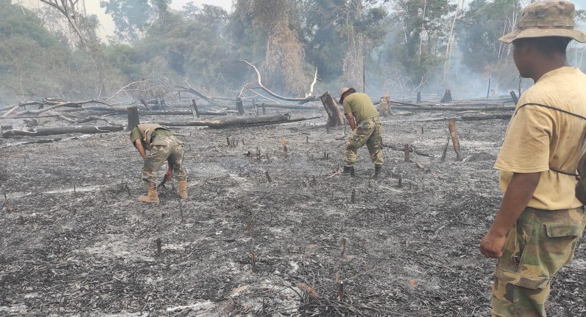 Casi 1 millón de hectáreas fueron afectadas por incendios forestales. Foto: ABI